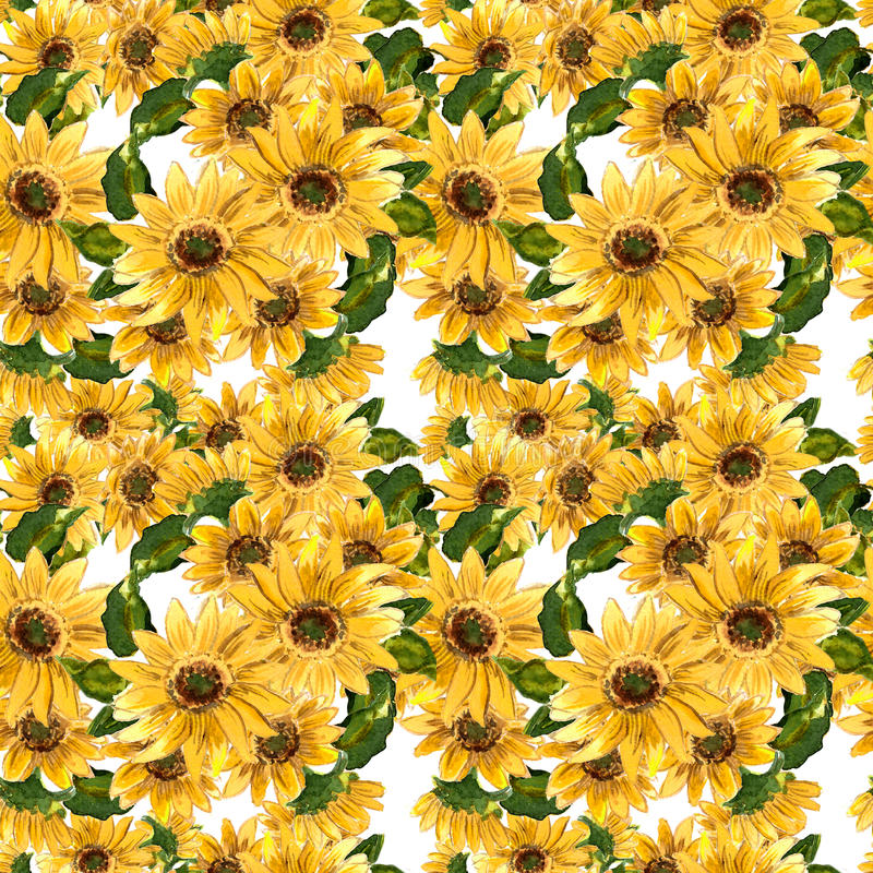 Modellen av blommande guling blommar solrosen som målas i vattenfärg vektor illustrationer