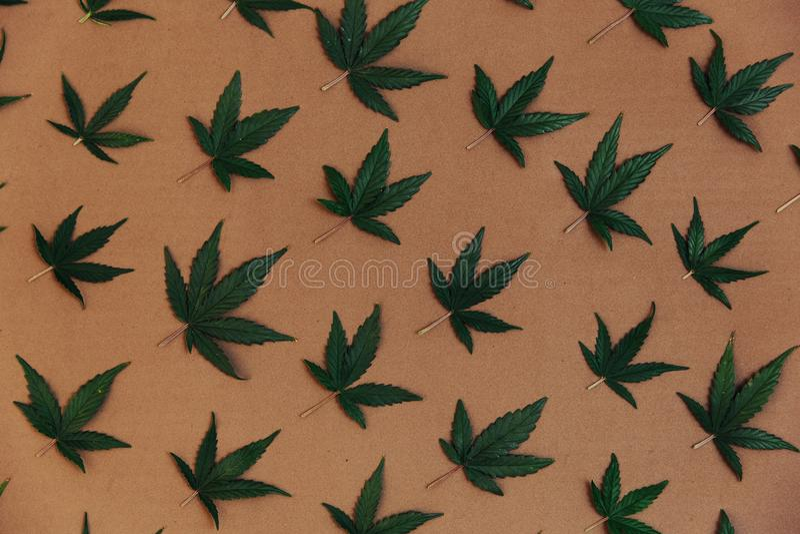 Modellen av sidor för en cannabis Ganja marijuanaogräs arkivbilder