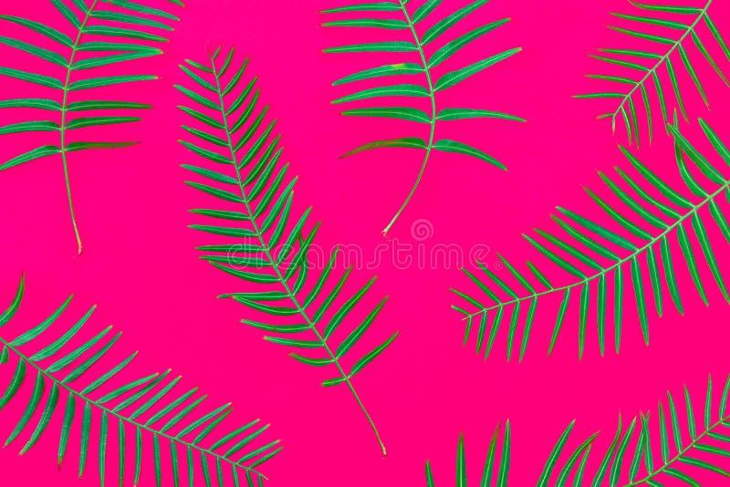 Modellen från ny gräsplan gömma i handflatan ormbunkesidor på rosa bakgrund för fast fuchsia Tropisk botanisk blom- bakgrund Mode fotografering för bildbyråer