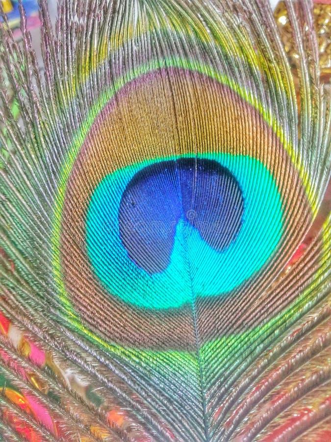 Modellen på påfågelbakgrund Modellen på påfågeltapeten arkivfoton