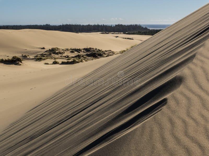 Modeller i sanddyn som formas av vind royaltyfri foto