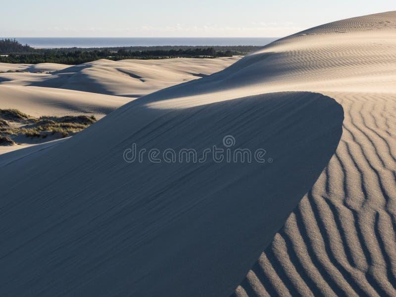 Modeller i sanddyn som formas av vind royaltyfria bilder