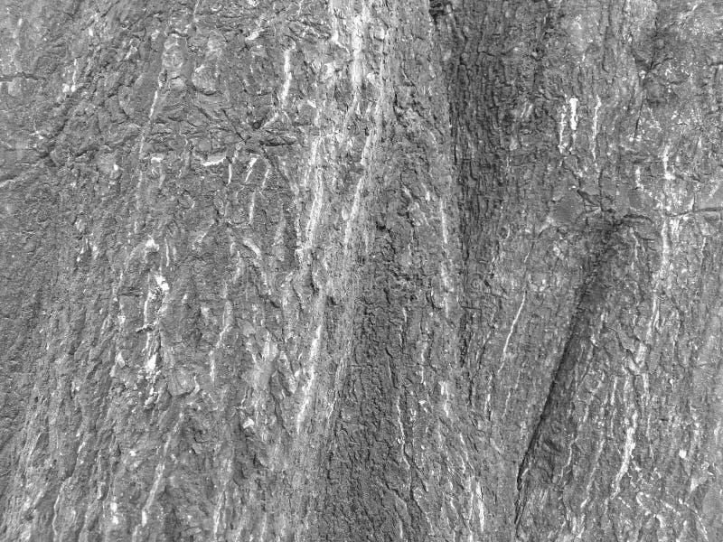 Modeller och texturer av träd royaltyfri fotografi