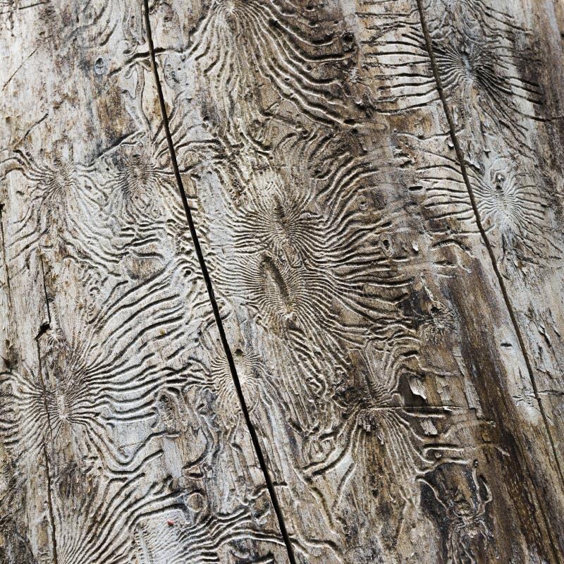 Modellerna på trädstammen royaltyfri fotografi