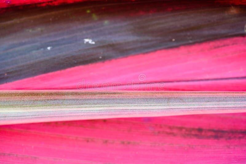 Modelli astratti della foglia rosa fotografie stock libere da diritti