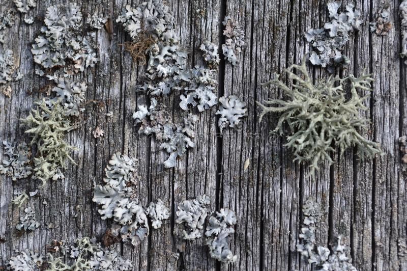 modelli interessante del vecchio fungo grigio antichissimo delle crescite del muschio retro fotografia stock