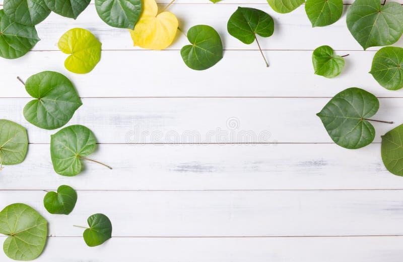 Modelli la foglia verde a forma di cuore su fondo di legno bianco immagine stock libera da diritti