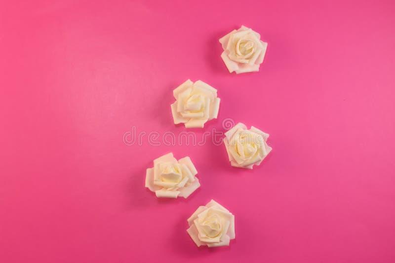 Modelli le rose bianche bianche sul fondo di rosa pastello Disposizione piana, vista superiore fotografia stock libera da diritti