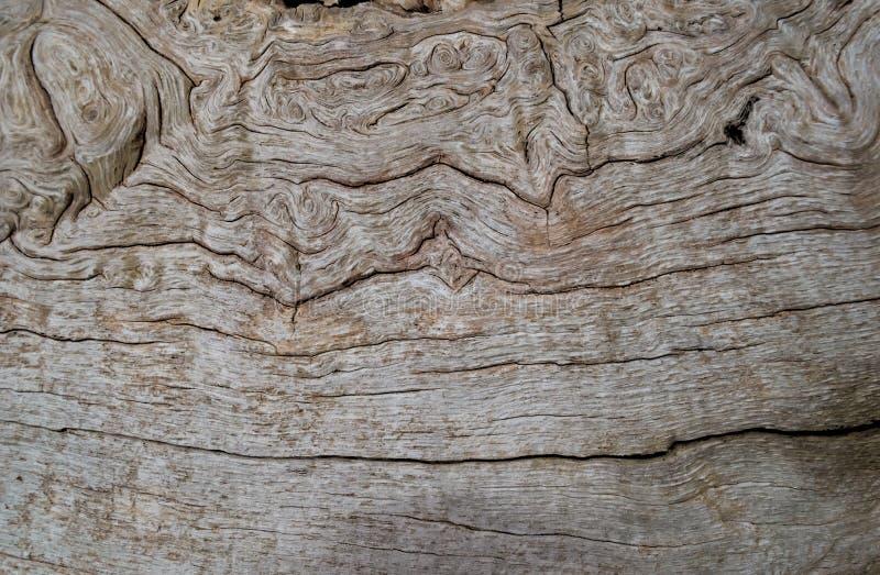 Modelli in legno naturale immagine stock