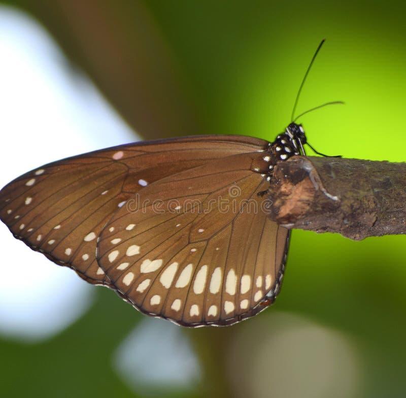 Modelli su una farfalla fotografia stock libera da diritti