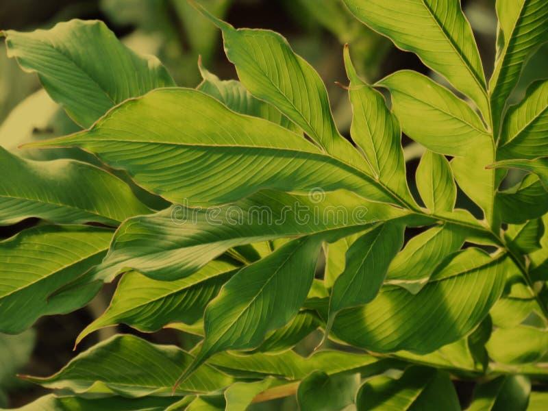 Modelli verdi della foglia, strutture e bella forma delle foglie fotografia stock libera da diritti