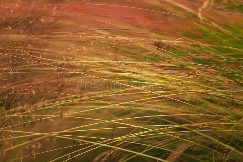 Modello astratto dell'erba selvatica immagini stock