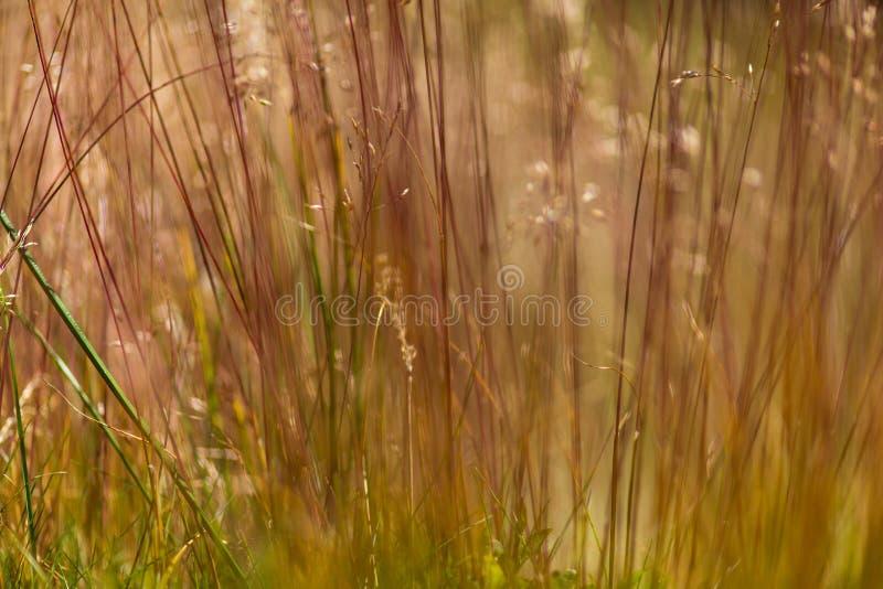 Modello astratto dell'erba selvatica fotografia stock