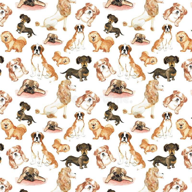 Modello con i cani: Cane di St Bernard, bassotto tedesco, cibo di cibo, barboncino, carlino Acquerello del disegno della mano royalty illustrazione gratis