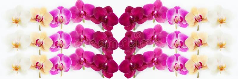 Modello con i fiori delle orchidee su bianco fotografia stock