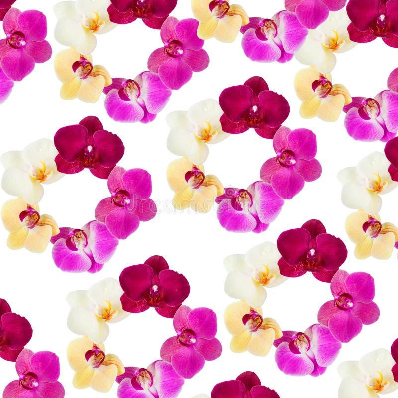Modello con i fiori delle orchidee su fondo bianco fotografie stock