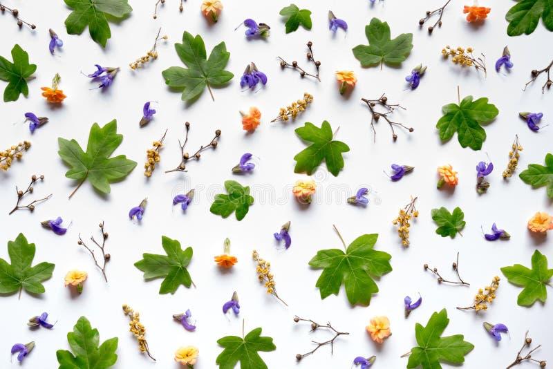 Modello con i fiori variopinti fotografia stock