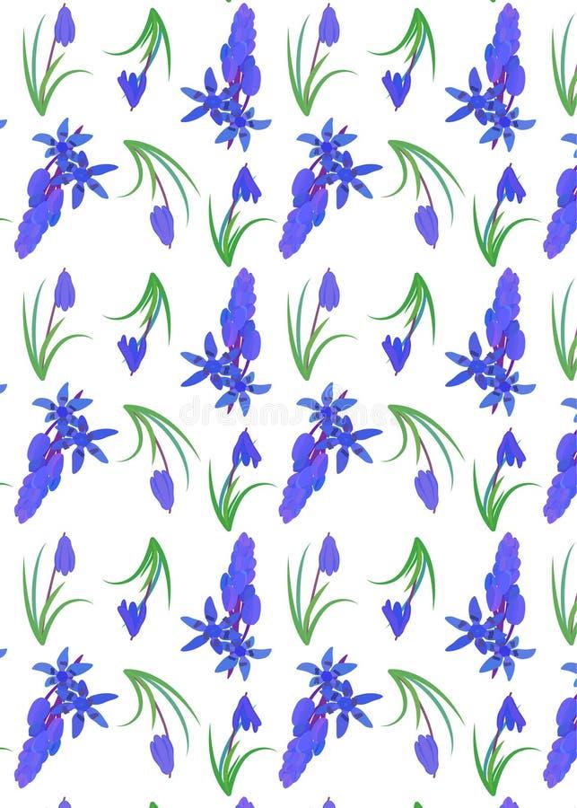Modello con lo scilla della pianta Siberica siberiano di Scilla della scilla marina fiore della molla con le foglie ed il gambo royalty illustrazione gratis