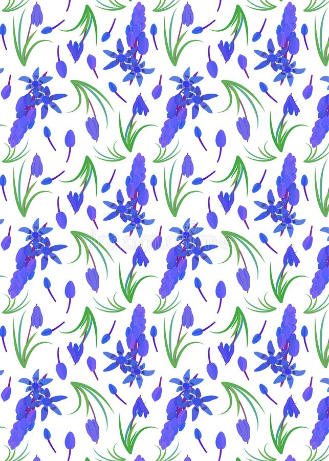 Modello con lo scilla della pianta Siberica siberiano di Scilla della scilla marina fiore della molla con le foglie ed il gambo illustrazione vettoriale