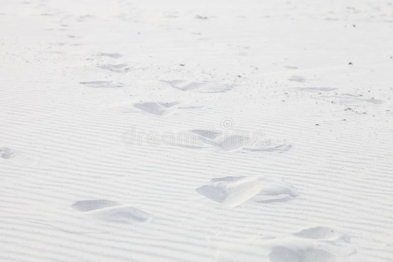 Modello costiero di struttura della sabbia della spiaggia per il fondo di progettazione immagini stock