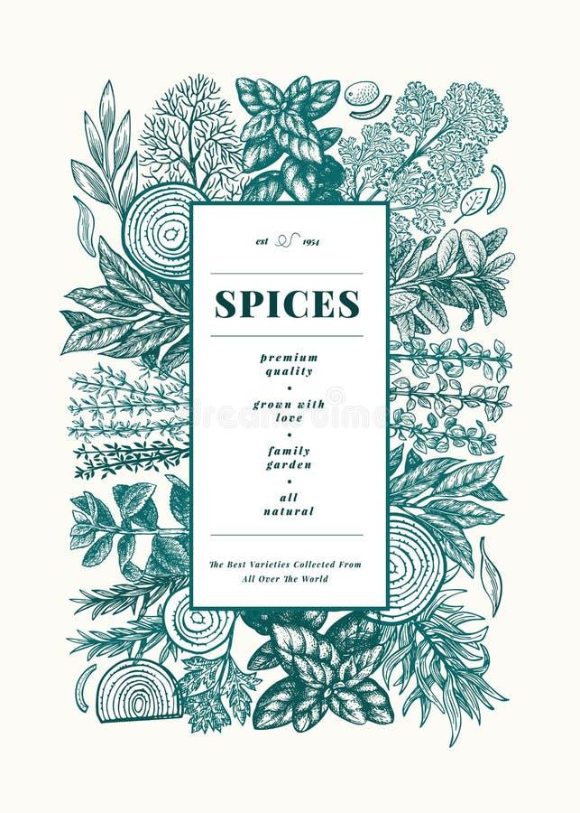 Modello culinario dell'insegna delle spezie e delle erbe Illustrazione botanica d'annata disegnata a mano Fondo di vettore per il illustrazione vettoriale