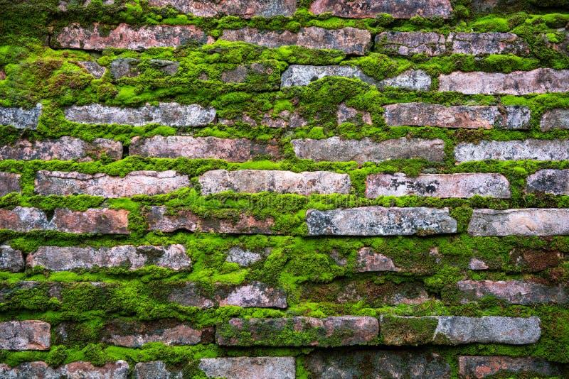 Modello dei mattoni con la vecchia erba rustica verde del muschio immagini stock
