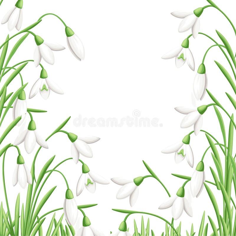 Modello del fiore della molla I primi bucaneve Galanthus Fiori per la decorazione Illustrazione di vettore isolata su priorità ba illustrazione vettoriale