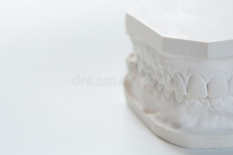 Modello del gesso della mandibola umana su un fondo bianco fotografia stock libera da diritti