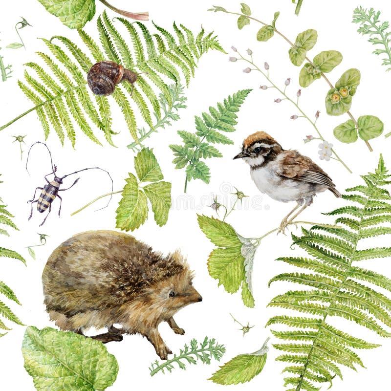 Modello dell'acquerello con le piante e Hedhog della foresta fotografie stock libere da diritti