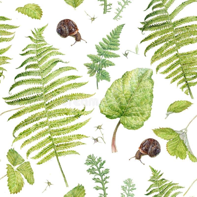 Modello dell'acquerello con le piante e le lumache della foresta fotografia stock libera da diritti