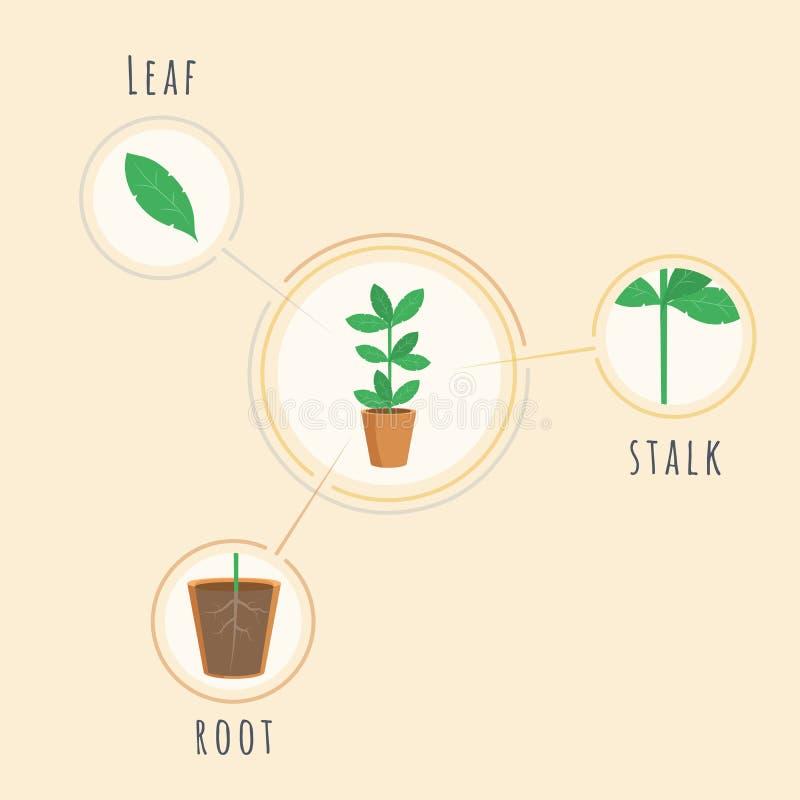 Modello dell'insegna di vettore della struttura delle piante Attrezzatura di lezione di biologia, strumento, cartello che spiega  illustrazione vettoriale