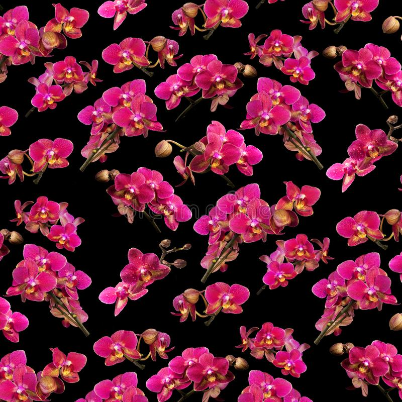 Modello dell'orchidea sul nero fotografia stock libera da diritti