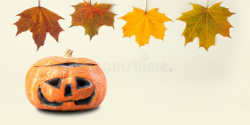 Modello della decorazione di Halloween con le foglie di acero variopinte della zucca arancio Vista spaventosa di macro dell'ogget immagini stock