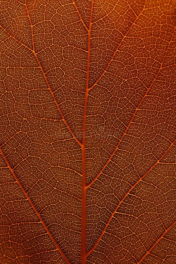 Modello della foglia dell'albero immagini stock libere da diritti