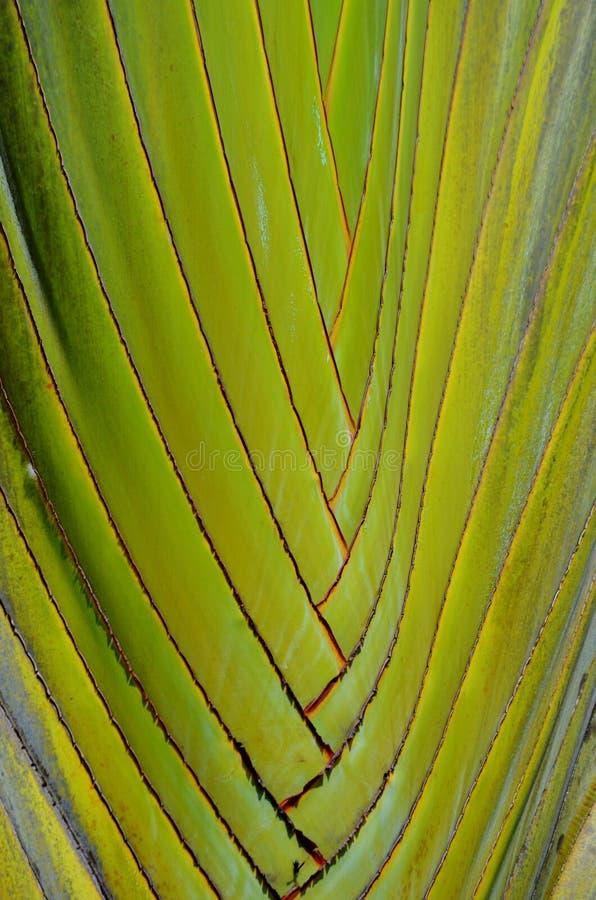 Modello della palma del viaggiatore immagini stock libere da diritti