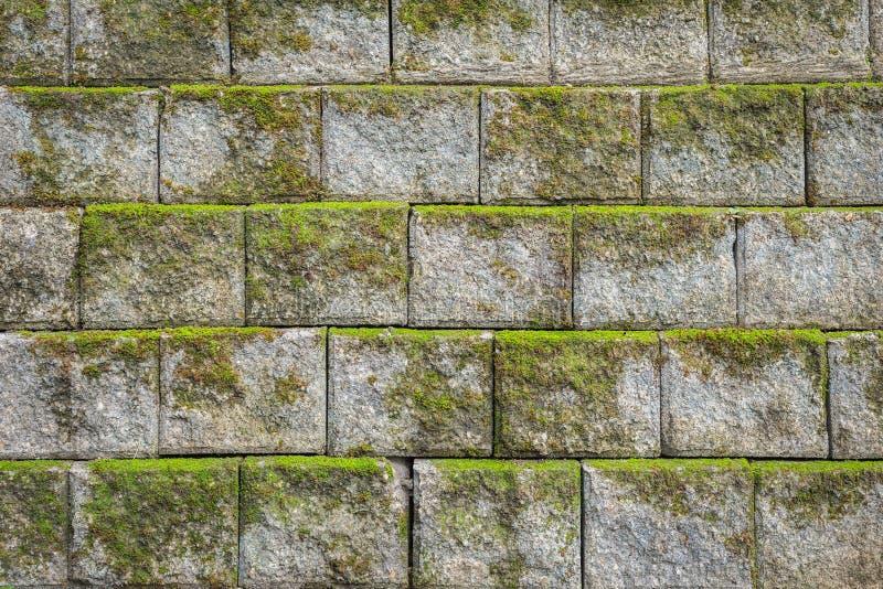 Modello della parete di pietra con il fondo e la struttura verdi del muschio fotografia stock libera da diritti