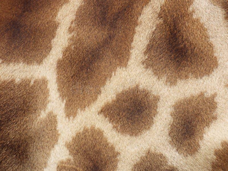 Modello della pelle della giraffa immagini stock libere da diritti