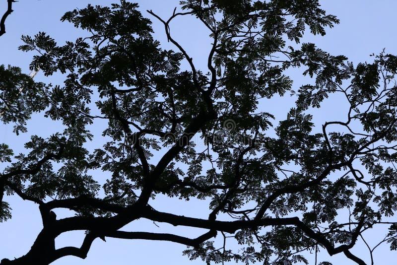 Modello della siluetta dell'albero fotografia stock libera da diritti