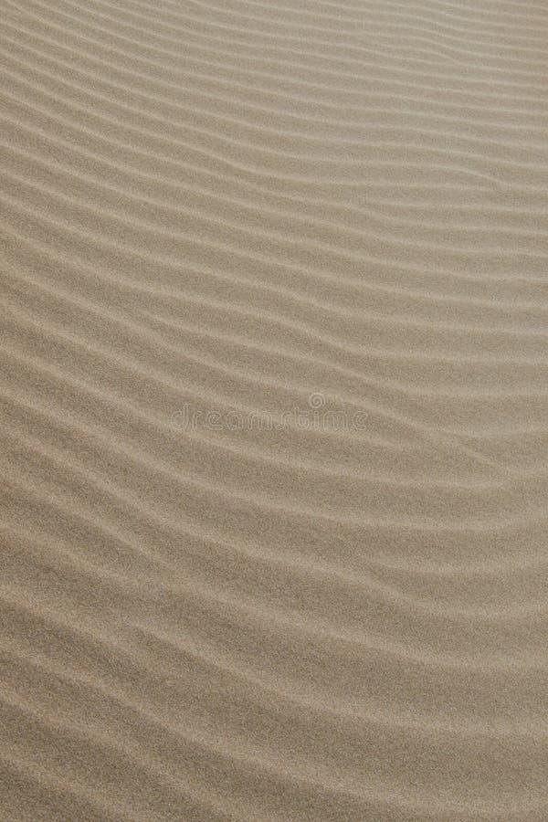Modello della spiaggia di sabbia Struttura della sabbia fotografia stock