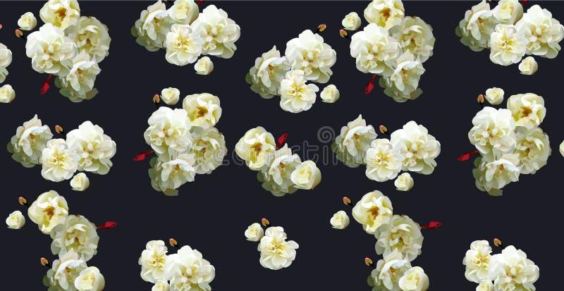 Modello delle rose bianche su buio fotografie stock libere da diritti
