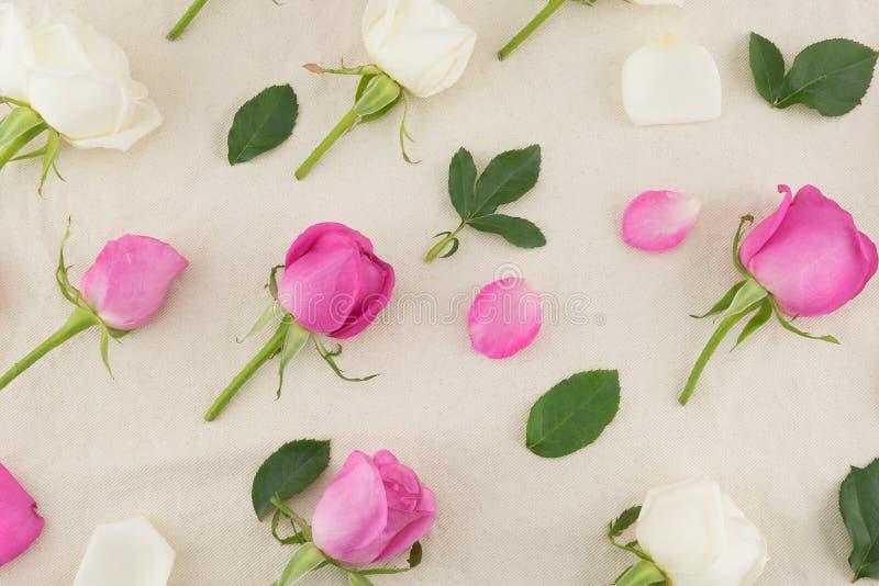 Modello delle rose rosa e bianche, dei petali e delle foglie verdi immagine stock