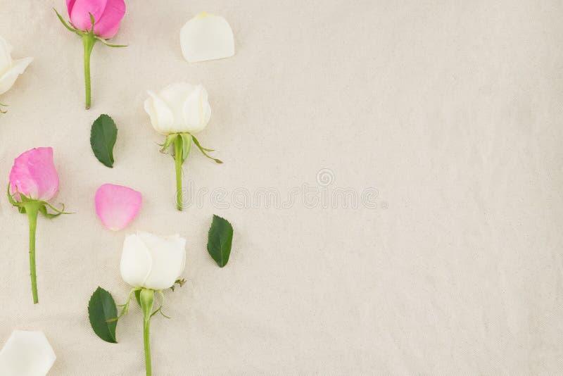 Modello delle rose rosa e bianche, dei petali e delle foglie verdi fotografia stock