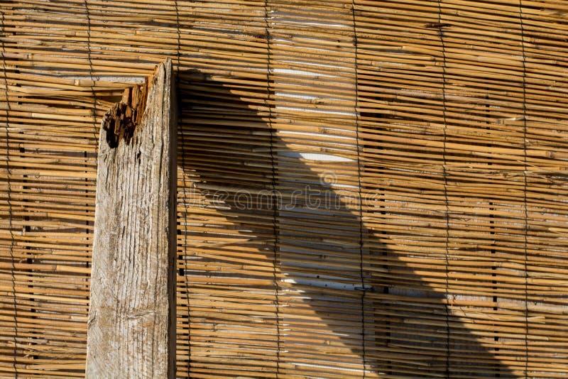 Modello di bambù di marrone giallo con un pezzo di legno fotografia stock libera da diritti
