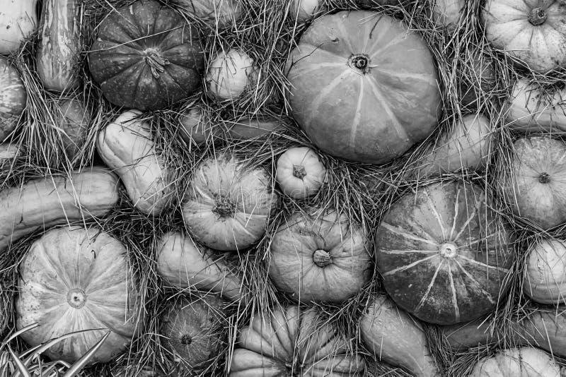 Modello di base di ortaggi a base stagionale per la produzione di minucce monocromatiche vegetali fotografia stock