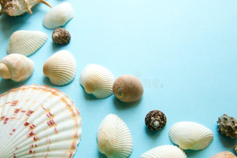 Modello di disposizione del piano delle conchiglie su fondo blu, fondo di vacanza del mare con lo spazio della copia, vista super fotografia stock libera da diritti