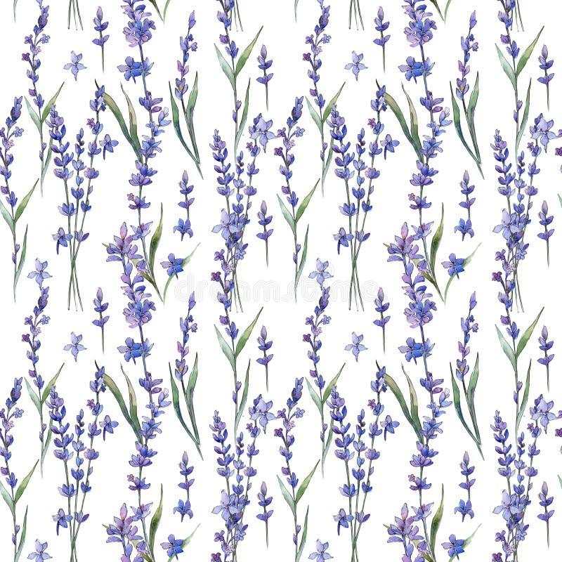 Modello di fiore del lavander del Wildflower in uno stile dell'acquerello illustrazione vettoriale