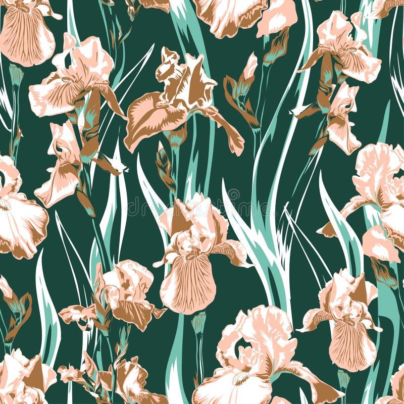Modello di fiore dell'iride del Wildflower Nome completo delle iridi della pianta fiore di color salmone dell'iride per fondo, st illustrazione di stock