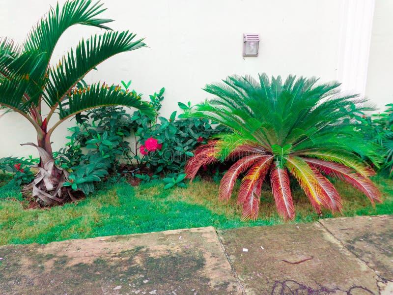 Modello di fiore della facciata della casa fotografia stock libera da diritti