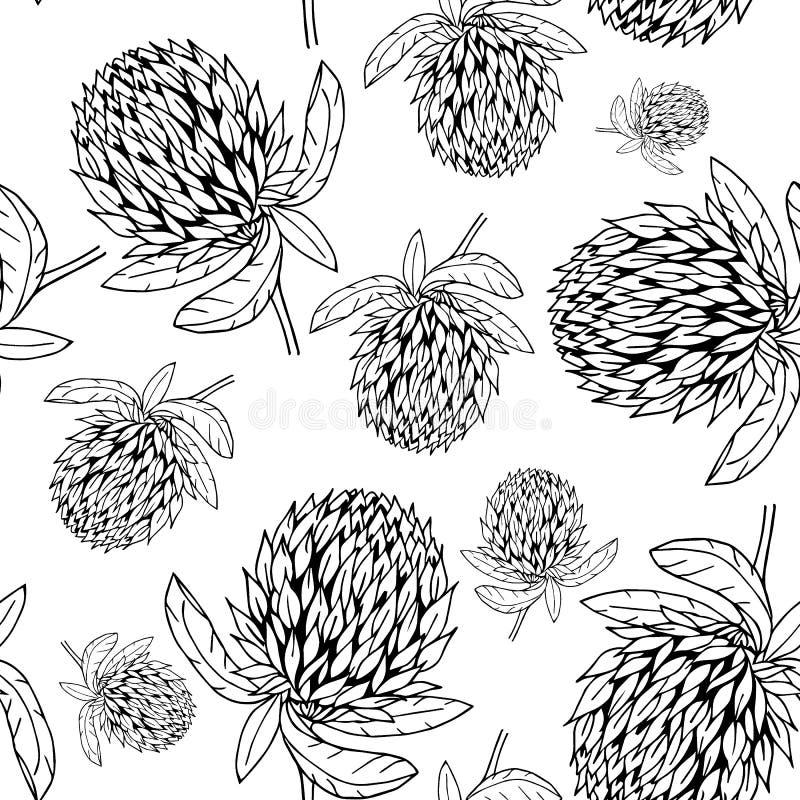 Modello di fiore disegnato a mano del trifoglio illustrazione vettoriale