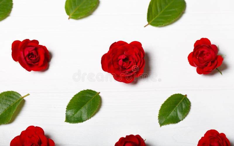 Modello di fiore fatto dalle rose rosse e dalle foglie Tabella di legno bianca fotografia stock libera da diritti